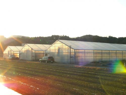 第二農場 新年