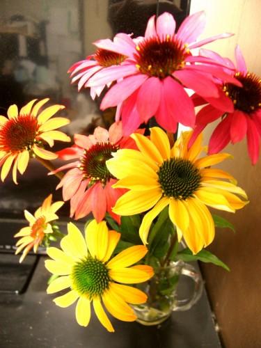 14 6 エキナセア 切り花