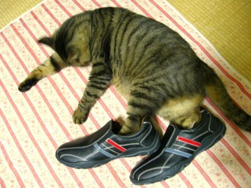 14 8 まー おニューの靴でランララン