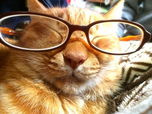 15 1 4 ねこ メガネ 1