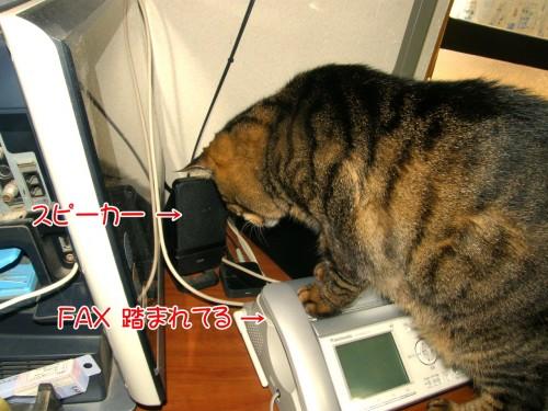 15 1 21 ウズラの鳴き声に反応するネコ