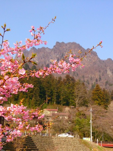 15 3 27 妙義山と河津桜