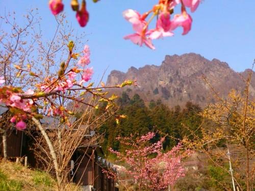 15 3 27 妙義山と河津桜 2