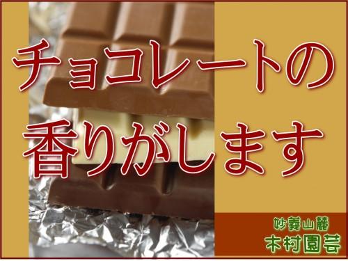 15 5 16 チョコレートの香り2