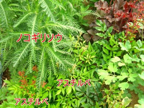 15 5 24 花壇