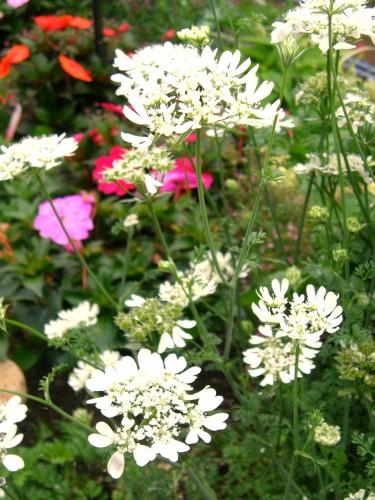15 6 14 オルラヤ 花壇