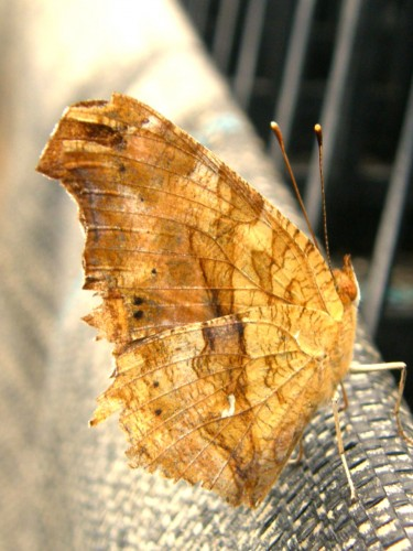15 7 16 蝶々