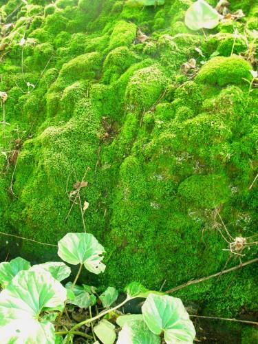 15 7 10 岩肌の苔