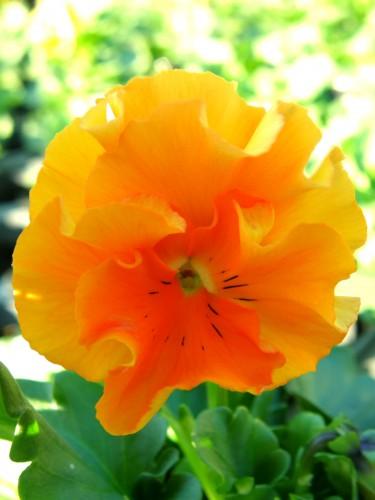 15 10 30 フリズルシズル オレンジ