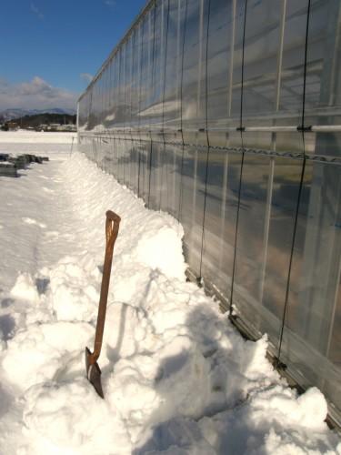 16 1 19 雪 第二農場 サイド 4