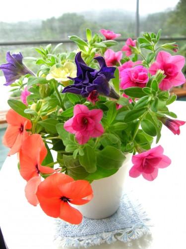 16 7 21 切り戻したお花を切り花に