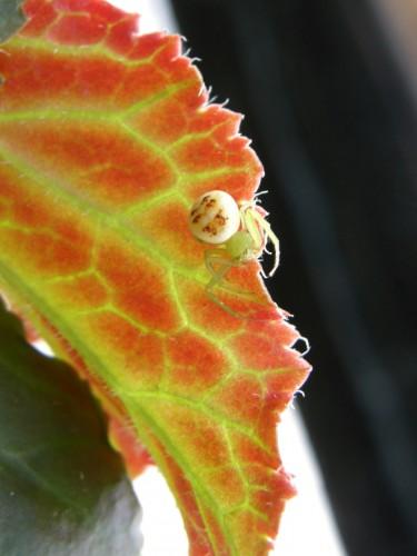 16 7 2 クモ 顔に見える模様