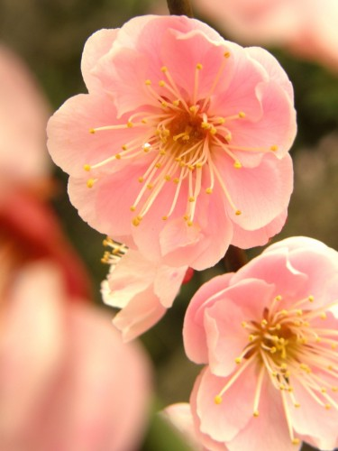 17 3 23 梅の花 10