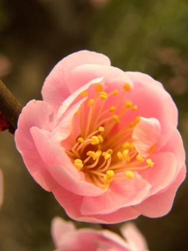 17 3 23 梅の花 9