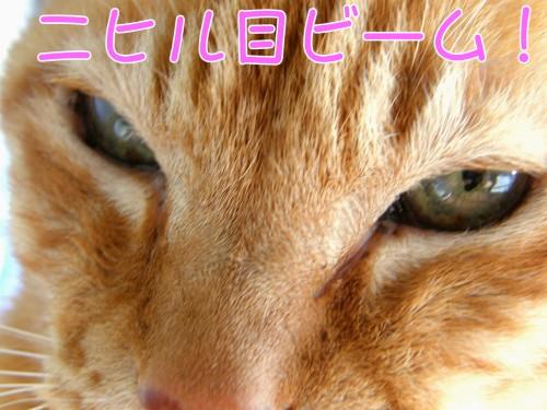18 2 18 ねこ ニヒル目ビーム